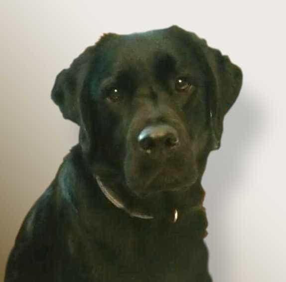 Beni daje svoj doprinos stranici o nama - pogled psa